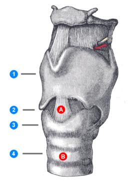 256px-Cricothyrotomy